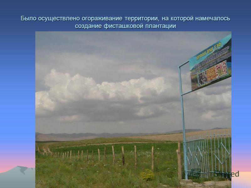 Было осуществлено огораживание территории, на которой намечалось создание фисташковой плантации
