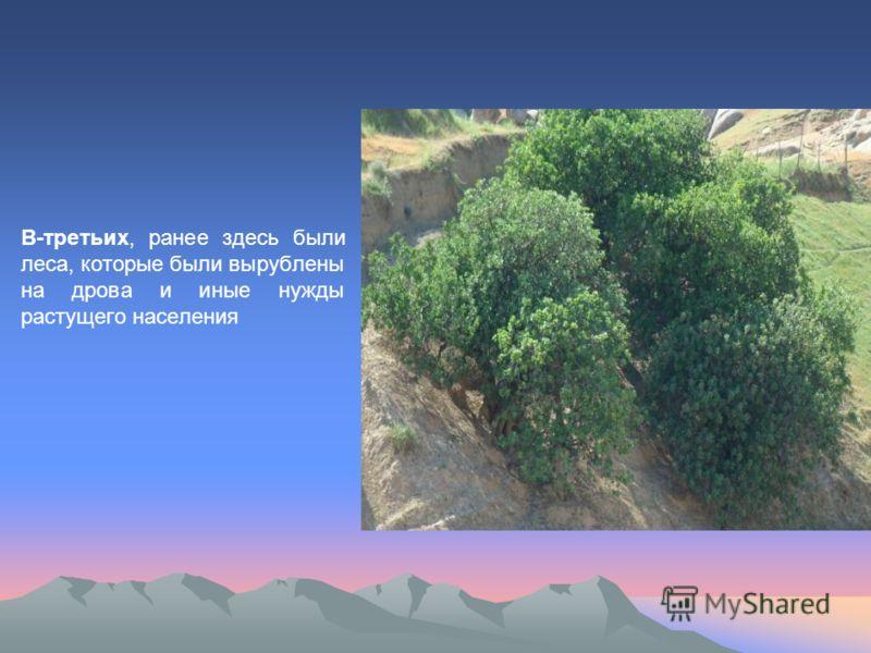 В-третьих, ранее здесь были леса, которые были вырублены на дрова и иные нужды растущего населения