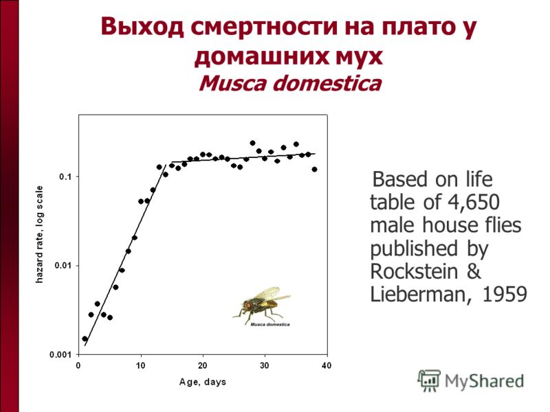 Выход смертности на плато у домашних мух Musca domestica Based on life table of 4,650 male house flies published by Rockstein & Lieberman, 1959