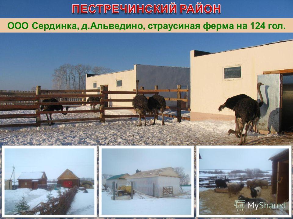 ООО Сердинка, д.Альведино, страусиная ферма на 124 гол.