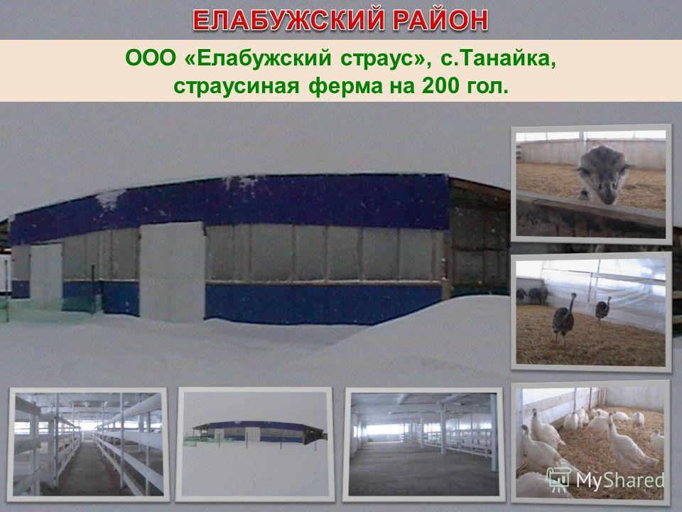 ООО «Елабужский страус», с.Танайка, страусиная ферма на 200 гол.