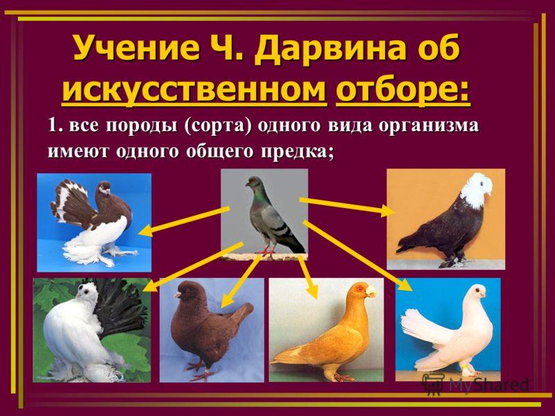 Учение Ч. Дарвина об искусственном отборе: 1. все породы (сорта) одного вида организма имеют одного общего предка;