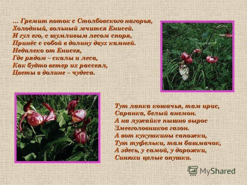 … Гремит поток с Столбовского нагорья, Холодный, вольный мчится Енисей. И гул его, с шумливым лесом споря, Принёс с собой в долину двух камней. Недалеко от Енисея, Где рядом – скалы и леса, Как будто ветер их рассеял, Цветы в долине – чудеса. Тут лап