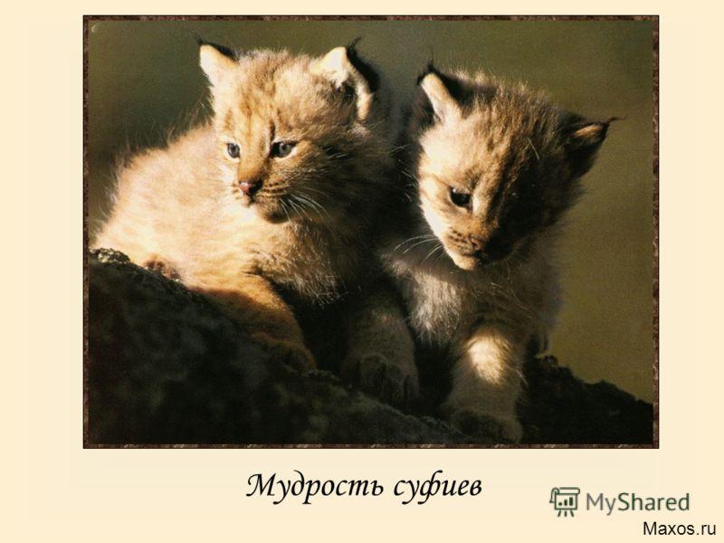 Мудрость суфиев Maxos.ru