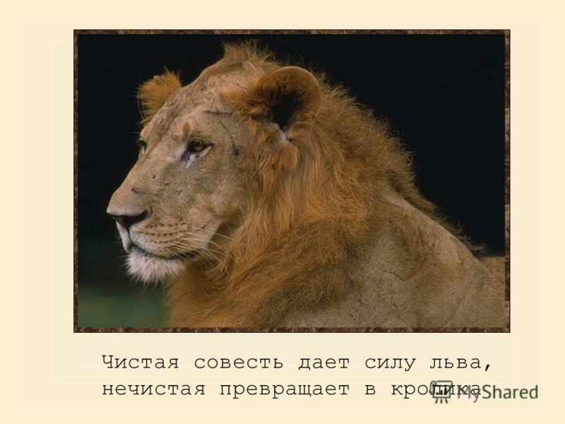 Чистая совесть дает силу льва, нечистая превращает в кролика