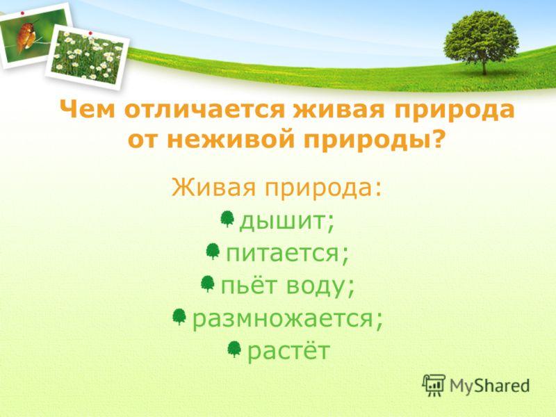Чем отличается живая природа от неживой природы? Живая природа: дышит; питается; пьёт воду; размножается; растёт