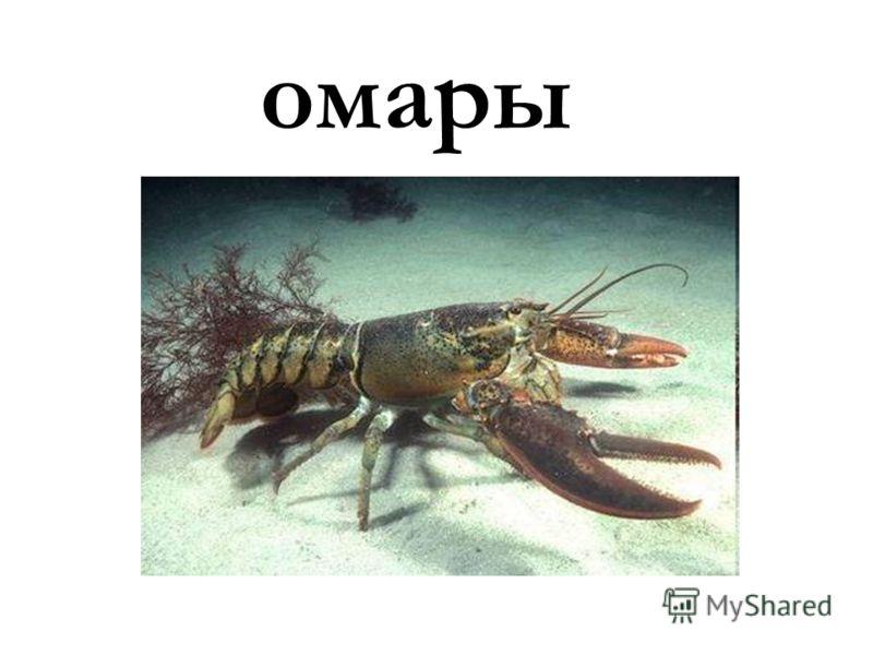 омары