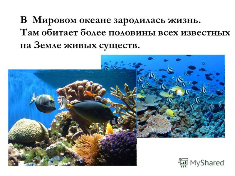 В Мировом океане зародилась жизнь. Там обитает более половины всех известных на Земле живых существ.