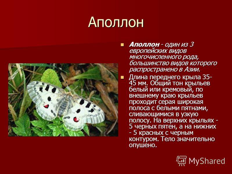 Аполлон Аполлон - один из 3 европейских видов многочисленного рода, большинство видов которого распространено в Азии. Аполлон - один из 3 европейских видов многочисленного рода, большинство видов которого распространено в Азии. Длина переднего крыла
