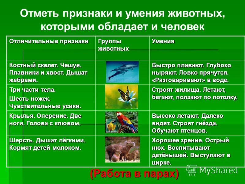 Группы животных Птицы Рыбы Земноводные Пресмыкающиеся Млекопитающие (Фронтальная работа) Насекомые