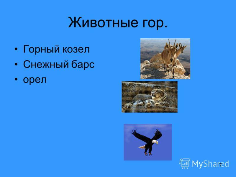 7 Животные гор. Горный козел Снежный барс орел