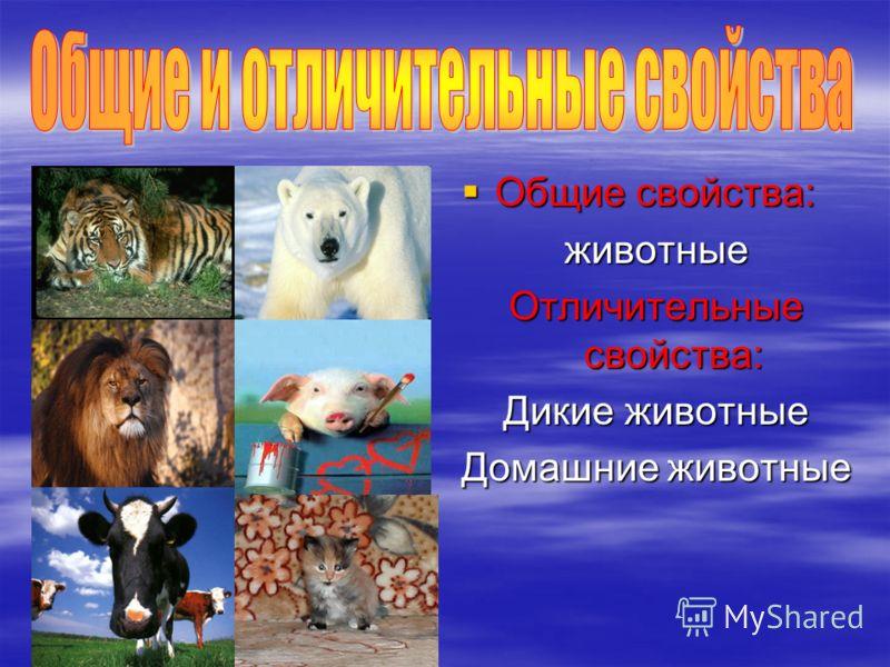 Общие свойства: животные Отличительные свойства: Дикие животные Домашние животные