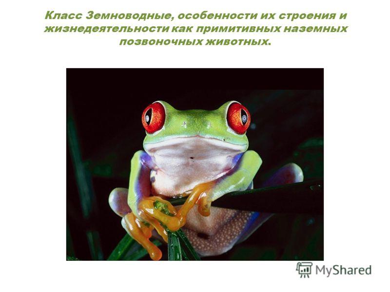 Класс Земноводные, особенности их строения и жизнедеятельности как примитивных наземных позвоночных животных.