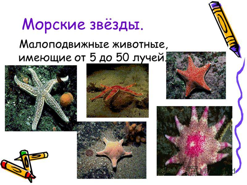 Морские звёзды. Малоподвижные животные, имеющие от 5 до 50 лучей.