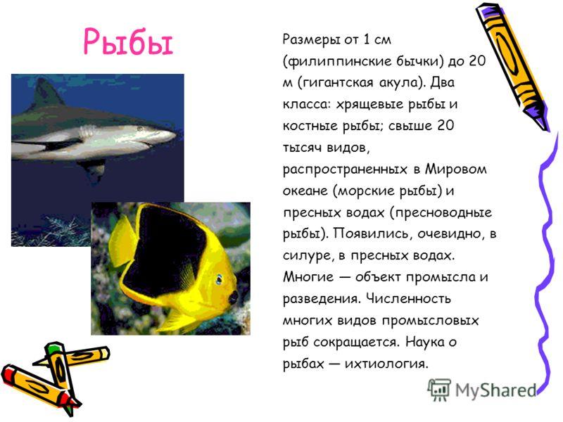Размеры от 1 см (филиппинские бычки) до 20 м (гигантская акула). Два класса: хрящевые рыбы и костные рыбы; свыше 20 тысяч видов, распространенных в Мировом океане (морские рыбы) и пресных водах (пресноводные рыбы). Появились, очевидно, в силуре, в пр