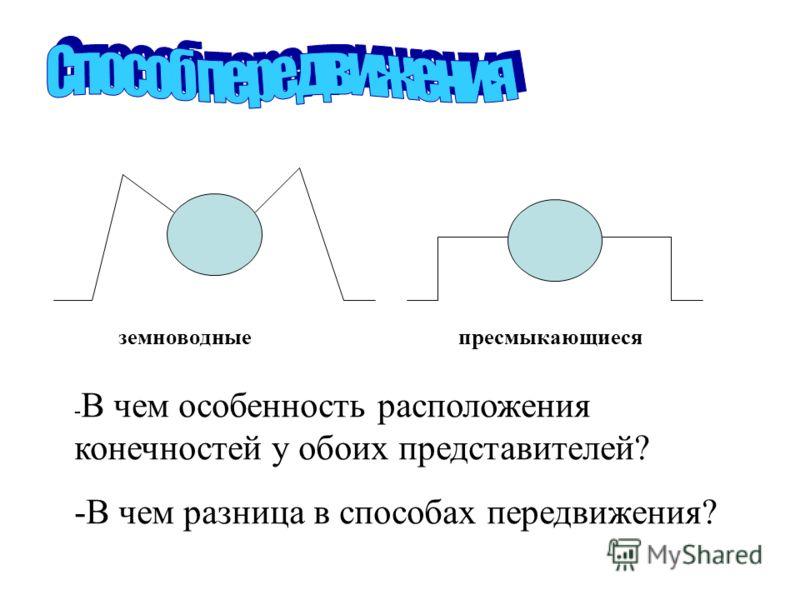 земноводныепресмыкающиеся - В чем особенность расположения конечностей у обоих представителей? -В чем разница в способах передвижения?