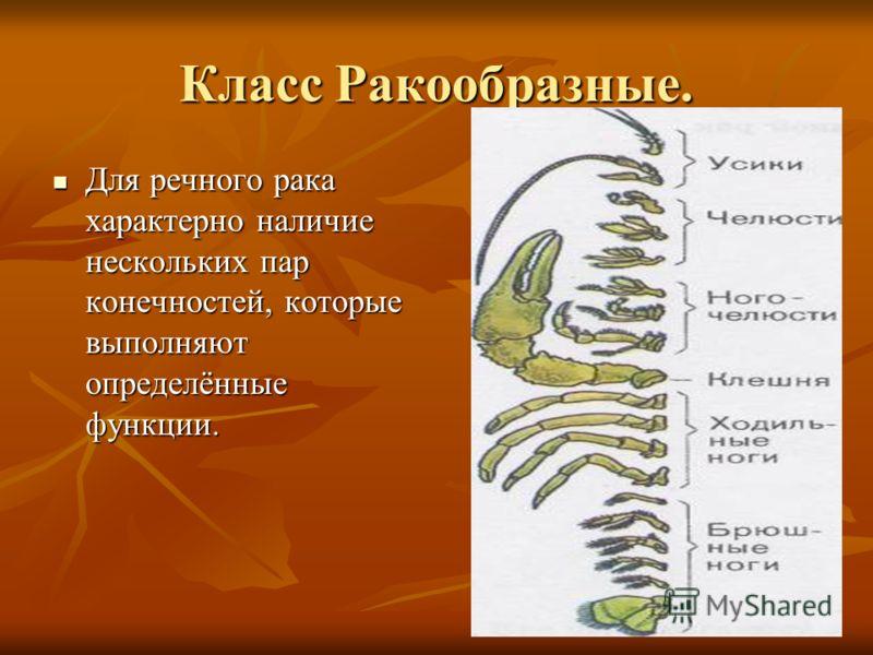 Класс Ракообразные. Для речного рака характерно наличие нескольких пар конечностей, которые выполняют определённые функции. Для речного рака характерно наличие нескольких пар конечностей, которые выполняют определённые функции.