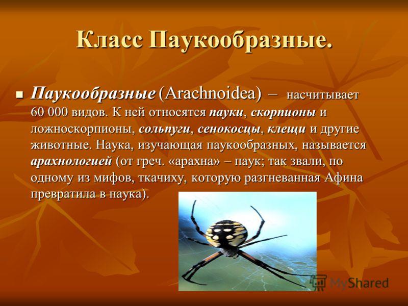 Класс Паукообразные. Паукообразные (Arachnoidea) – насчитывает 60 000 видов. К ней относятся пауки, скорпионы и ложноскорпионы, сольпуги, сенокосцы, клещи и другие животные. Наука, изучающая паукообразных, называется арахнологией (от греч. «арахна» –
