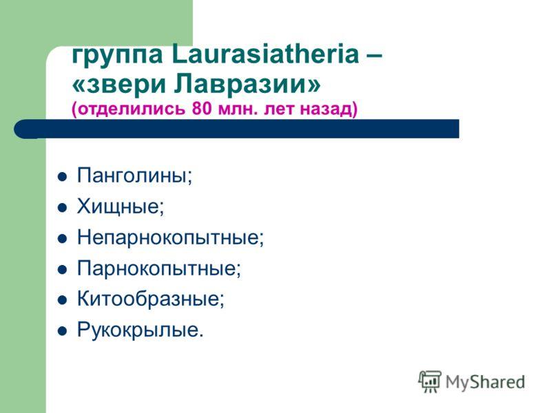 группа Laurasiatheria – «звери Лавразии» (отделились 80 млн. лет назад) Панголины; Хищные; Непарнокопытные; Парнокопытные; Китообразные; Рукокрылые.