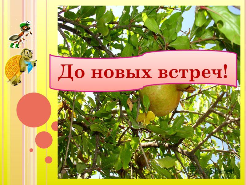 Кушайте, ребята огурцы и дыни - В овощах и фруктах много витаминов. Кушайте, ребята огурцы и дыни - В овощах и фруктах много витаминов. И растите сильными, Умными, весёлыми. Ешьте витамины - Будете здоровыми!. И растите сильными, Умными, весёлыми. Еш