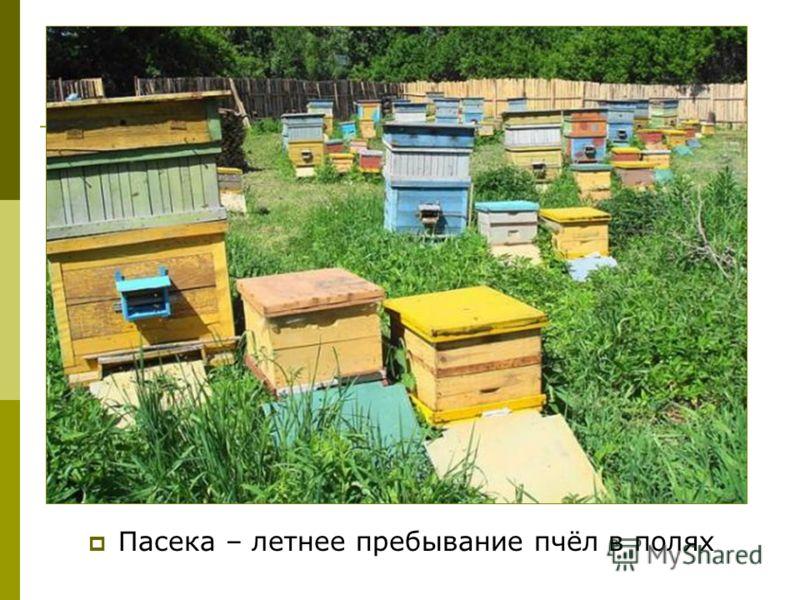 Пасека – летнее пребывание пчёл в полях