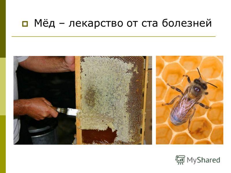 Мёд – лекарство от ста болезней