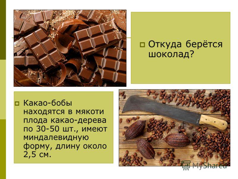 Откуда берётся шоколад? Какао-бобы находятся в мякоти плода какао-дерева по 30-50 шт., имеют миндалевидную форму, длину около 2,5 см.