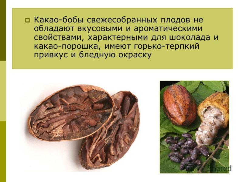 Какао-бобы свежесобранных плодов не обладают вкусовыми и ароматическими свойствами, характерными для шоколада и какао-порошка, имеют горько-терпкий привкус и бледную окраску
