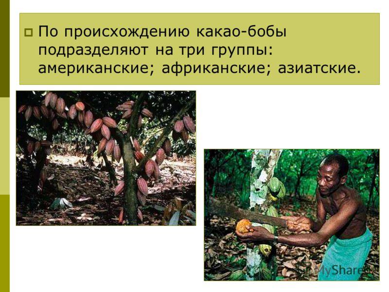 По происхождению какао-бобы подразделяют на три группы: американские; африканские; азиатские.