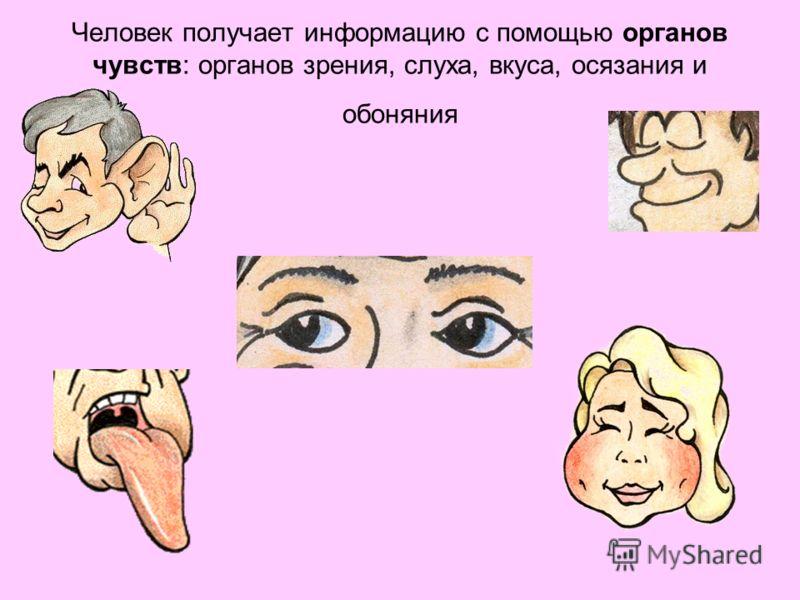 Человек получает информацию с помощью органов чувств: органов зрения, слуха, вкуса, осязания и обоняния