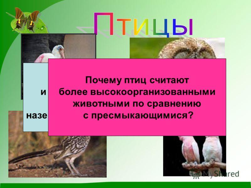 Какие особенности строения и процессов жизнедеятельности позволили птицам освоить наземно- воздушную среду обитания? Почему птиц считают более высокоорганизованными животными по сравнению с пресмыкающимися?