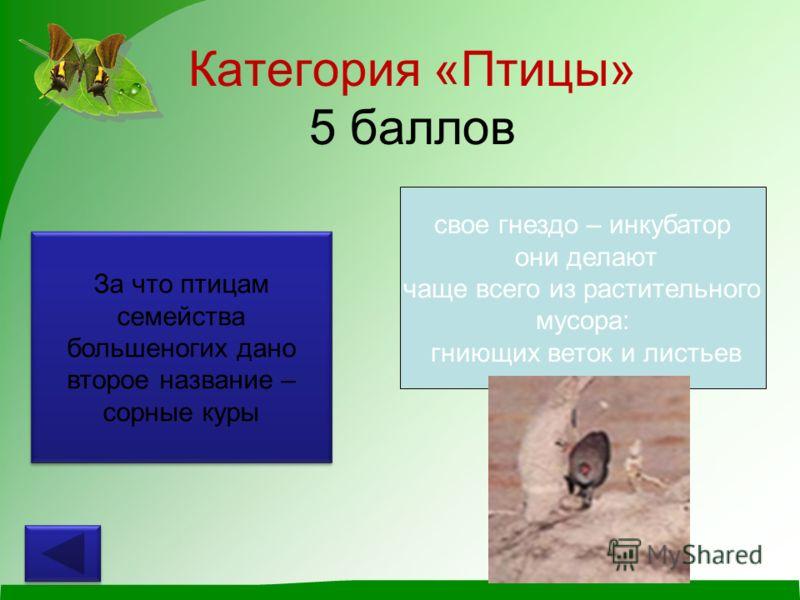 Категория «Птицы» 5 баллов За что птицам семейства большеногих дано второе название – сорные куры свое гнездо – инкубатор они делают чаще всего из растительного мусора: гниющих веток и листьев