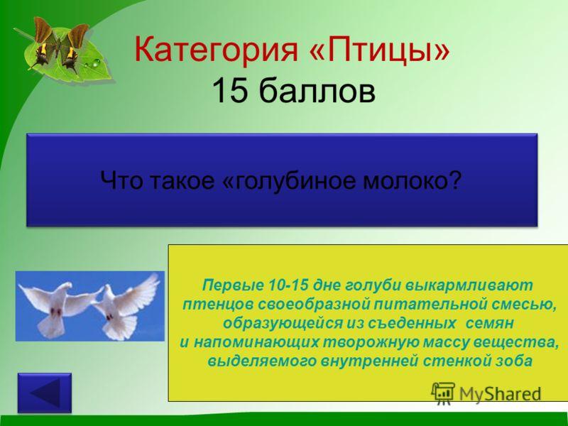 Категория «Птицы» 15 баллов Что такое «голубиное молоко? Первые 10-15 дне голуби выкармливают птенцов своеобразной питательной смесью, образующейся из съеденных семян и напоминающих творожную массу вещества, выделяемого внутренней стенкой зоба