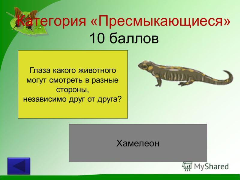 Категория «Пресмыкающиеся» 10 баллов Глаза какого животного могут смотреть в разные стороны, независимо друг от друга? Хамелеон