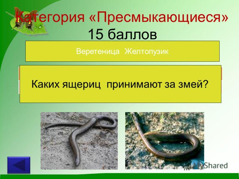 Категория «Пресмыкающиеся» 15 баллов Каких ящериц принимают за змей? Веретеница Желтопузик