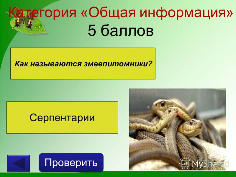 Категория «Общая информация» 5 баллов Проверить. Как называются змеепитомники? Серпентарии
