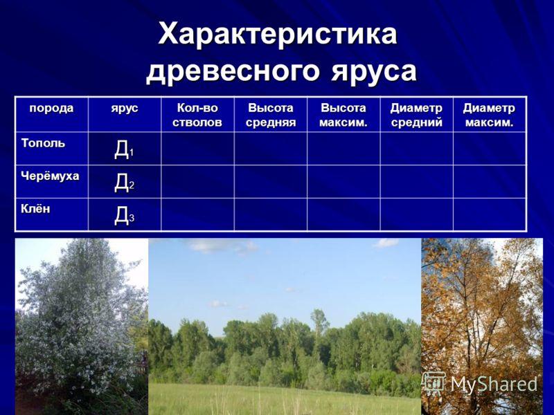 Характеристика древесного яруса породаярус Кол-во стволов Высота средняя Высота максим. Диаметр средний Диаметр максим. Тополь Д1Д1Д1Д1 Черёмуха Д2Д2Д2Д2 Клён Д3Д3Д3Д3