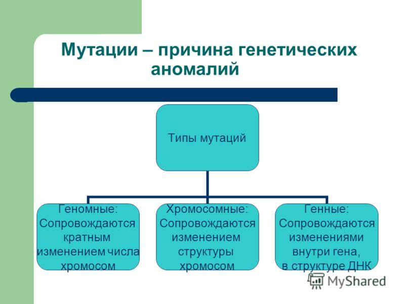 Мутации – причина генетических аномалий Типы мутаций Геномные: Сопровождаются кратным изменением числа хромосом Хромосомные: Сопровождаются изменением структуры хромосом Генные: Сопровождаются изменениями внутри гена, в структуре ДНК