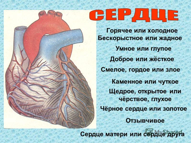 Горячее или холодное Бескорыстное или жадное Умное или глупое Отзывчивое Щедрое, открытое или чёрствое, глухое Каменное или чуткое Смелое, гордое или злое Доброе или жёсткое Чёрное сердце или золотое Сердце матери или сердце друга