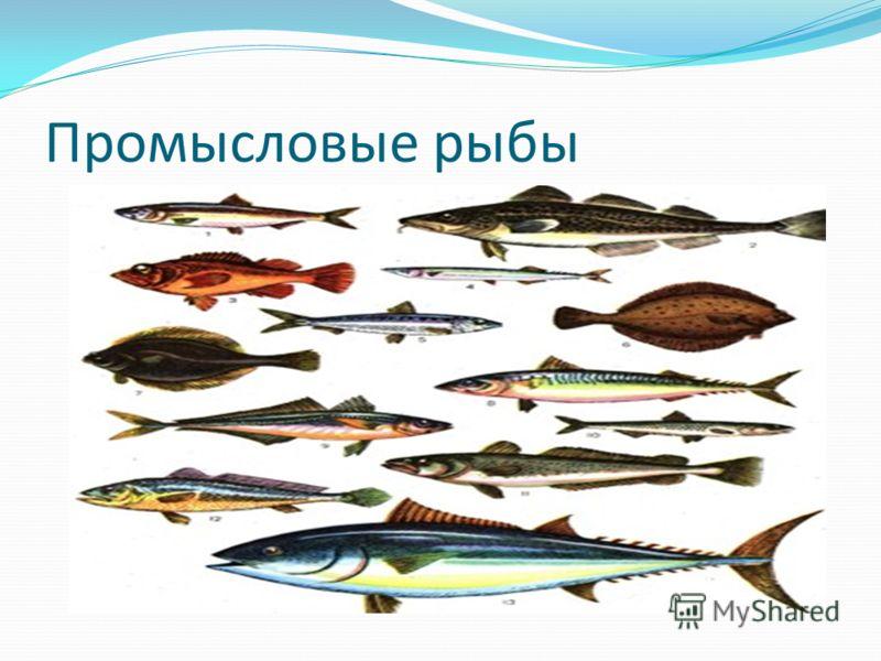 Промысловые рыбы