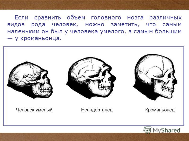 6 Если сравнить объем головного мозга различных видов рода человек, можно заметить, что самым маленьким он был у человека умелого, а самым большим у кроманьонца. Человек умелыйНеандерталецКроманьонец