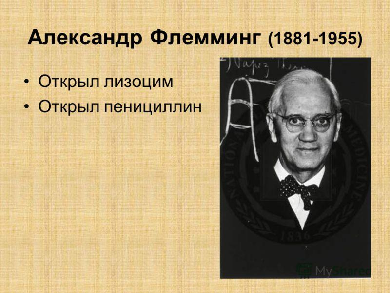 Александр Флемминг (1881-1955) Открыл лизоцим Открыл пенициллин