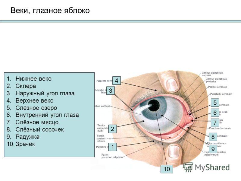 Угол Глаза