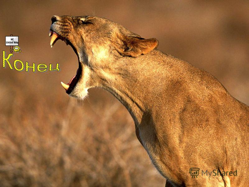 Каждый хищник применяет свои способы охоты, пуская в ход не только зубы, но и мощные когти.