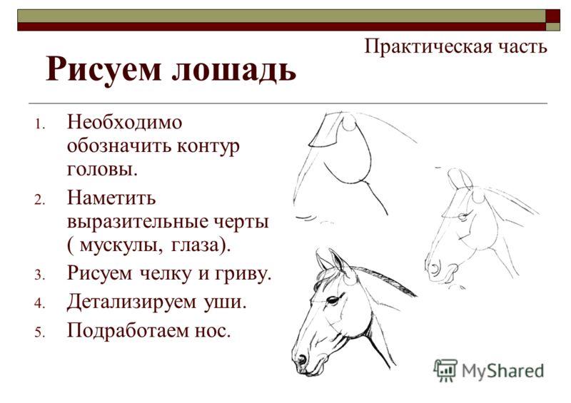 Практическая часть 1. Необходимо обозначить контур головы. 2. Наметить выразительные черты ( мускулы, глаза). 3. Рисуем челку и гриву. 4. Детализируем уши. 5. Подработаем нос. Рисуем лошадь