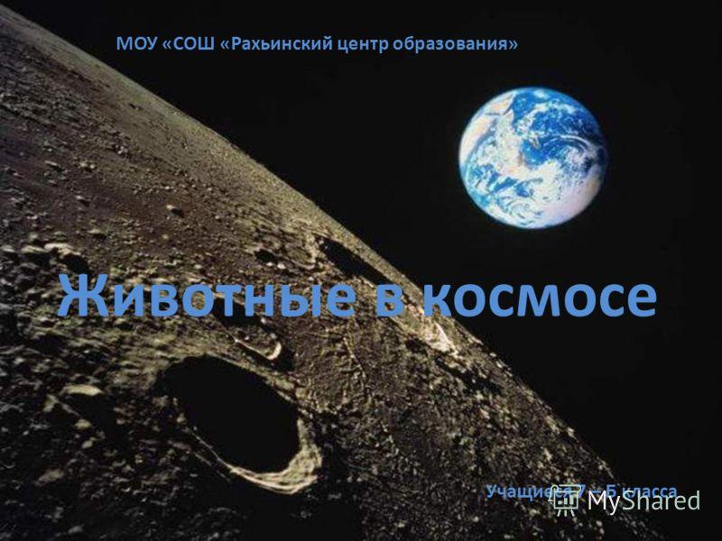 Животные в космосе МОУ «СОШ «Рахьинский центр образования» Учащиеся 7 – Б класса