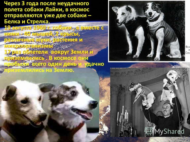 Через 3 года после неудачного полета собаки Лайки, в космос отправляются уже две собаки – Белка и Стрелка. 19 августа 1960 г. собаки, а вместе с ними - 40 мышей, 2 крысы, различные мухи, растения и микроорганизмы 17 раз облетели вокруг Земли и призем