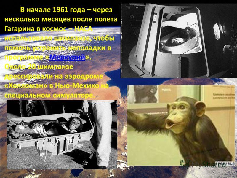 В начале 1961 года – через несколько месяцев после полета Гагарина в космос – НАСА использовало шимпанзе, чтобы помочь устранить неполадки в программе «Меркурий».Меркурий Около 20 шимпанзе дрессировали на аэродроме «Холломан» в Нью-Мехико на специаль