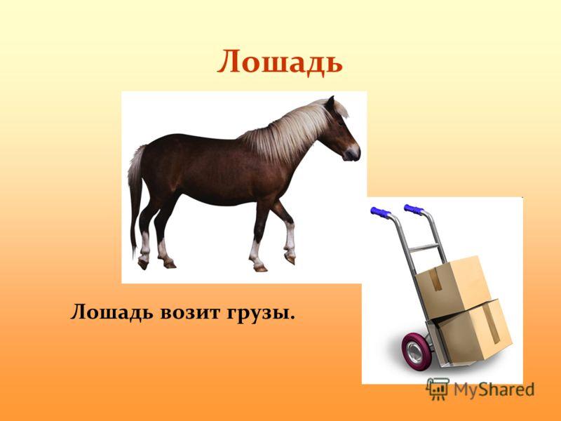 Лошадь Лошадь возит грузы.