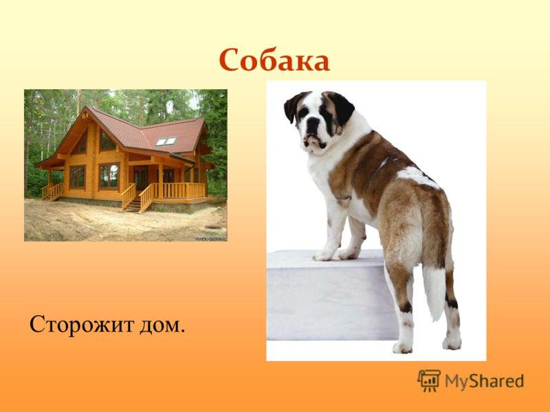 Собака Сторожит дом.